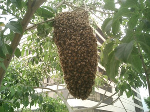 swarm of killer bees next to idealab